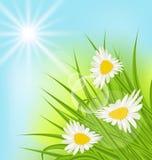 夏天与雏菊,草,蓝天,晴朗的光芒的自然背景 库存例证