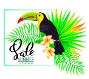 夏天与toucan花和叶子的销售构成 免版税库存图片