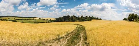 夏天乡下全景射击有土路的在领域之间 图库摄影