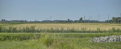 夏天乡下风景概要 免版税库存图片