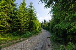 夏天供徒步旅行的小道 库存照片