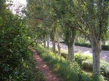 夏天公园Nikolaev 免版税库存图片
