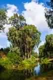 夏天公园Yarkon视图  免版税图库摄影
