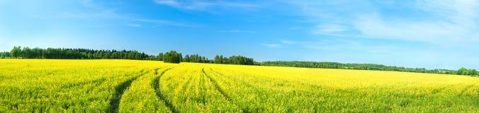 夏天农村风景有一个黄色领域的全景 库存照片
