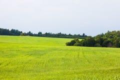夏天农村风景,绿色领域,森林边缘 库存照片