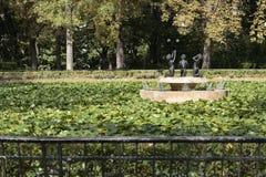 夏天前启发的喷泉花 库存图片
