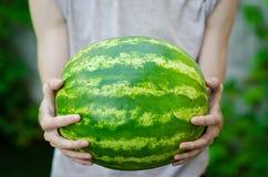 夏天和新西瓜题材:一个人拿着在绿色背景的一个西瓜 免版税库存照片