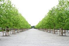 夏天和春天在绿色风景 免版税库存图片