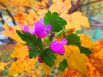 夏天和秋天的不可思议的组合 免版税库存图片