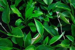 夏天和绿色叶子 免版税库存图片