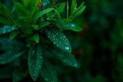 夏天和绿色叶子 免版税图库摄影
