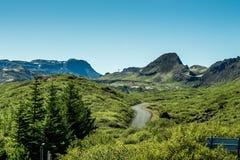 夏天国家公园冰岛 免版税库存照片