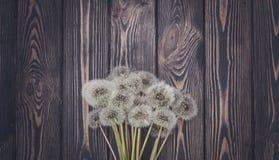夏天土气明信片 蒲公英和黑暗的木头 库存照片