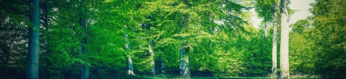 夏天在一个绿色森林里 库存图片