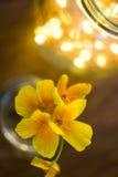 夏天在与bokeh的一个玻壳开花 库存图片