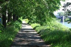 夏天在城市公园 免版税库存照片