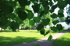 夏天在城市公园 免版税图库摄影