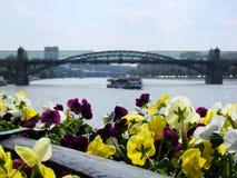 夏天在城市 图库摄影