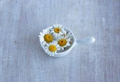 夏天在小调味汁瓶的野花春黄菊 免版税库存照片