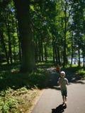 夏天在森林里 免版税库存照片