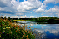 夏天在湖的岸开花 库存照片