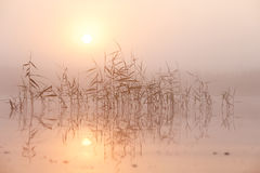 夏天在湖的早晨雾 免版税库存图片