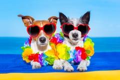 夏天在爱的蜜月狗 免版税库存图片