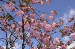 夏天在爽快树的天气绽放 库存照片