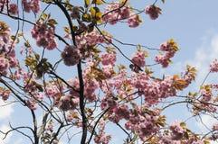 夏天在爽快树的天气绽放 图库摄影