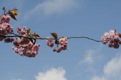 夏天在爽快树的天气绽放 库存图片
