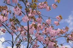 夏天在爽快树的天气绽放 免版税库存照片