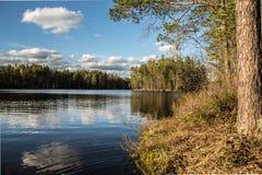 夏天在芬兰森林里 免版税库存照片