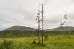夏天在芬兰的拉普兰 免版税库存图片