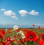 夏天在草甸和云彩开花在它 免版税库存图片