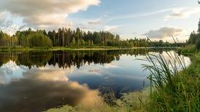 夏天在Ural湖的晚上风景有在岸,俄罗斯的杉树的 免版税库存图片