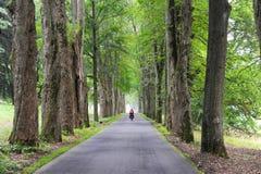 夏天场面,骑自行车者骑马的后面看法通过小路标示用树 循环在沿途有树的大道和没有c的妇女 免版税库存图片