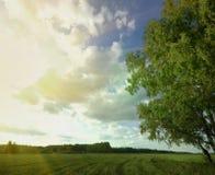 夏天天空树领域 免版税库存照片