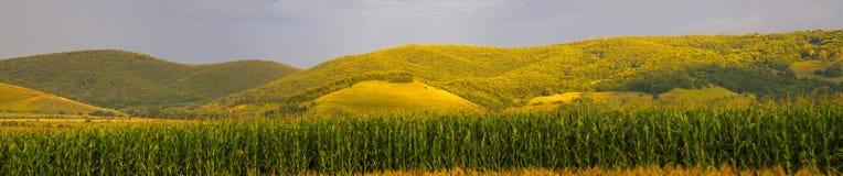 夏天小山和麦地 图库摄影
