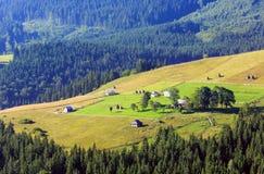 夏天山景(喀尔巴阡山脉,乌克兰) 库存照片