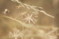 夏天干燥野花 库存照片