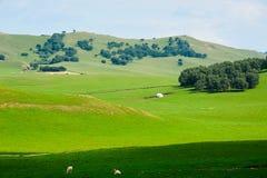 夏天干草原的森林 免版税库存图片