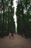 夏天庭院在圣彼德堡 免版税图库摄影