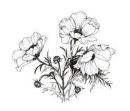 夏天庭院开花的花黑白照片例证 库存例证
