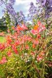夏天庭院开花 库存照片