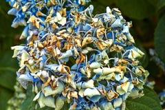 夏天开花的花在阿纳姆 荷兰7月 免版税图库摄影