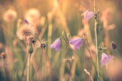 夏天开花的草甸梦想的感觉 免版税库存照片