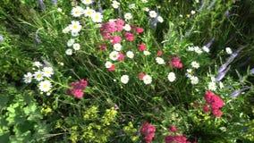 夏天开花草和其他植物4K 影视素材