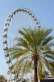 夏天弗累斯大转轮和棕榈树,迪拜 免版税库存图片
