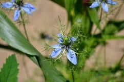 夏天微小花卉生长在佛蒙特 免版税库存图片