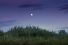 夏天或秋天晚上,以d为背景的月亮 免版税库存图片